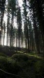 在到森林 免版税库存图片