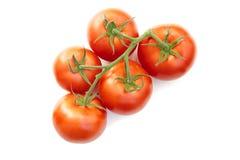 在前成熟蕃茄视图之上 库存照片