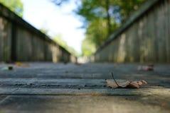在前景以桥梁为背景的一片干燥秋天叶子在一个被弄脏的框架 库存图片