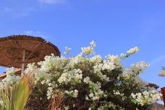 在前景的明亮的灌木花 免版税库存照片