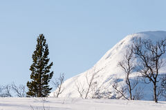 杉木、桦树、山和蓝天 库存照片