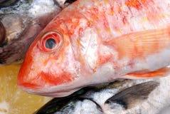 梭鱼和鲭鱼 免版税图库摄影