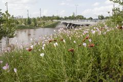 在前景的野花充斥了parkland和在背景中弄脏的土尔沙OK地平线和汽车和步行者  免版税库存图片