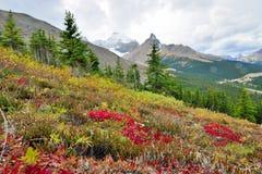 在前景的高山背景的花和加拿大人罗基斯 在班夫和碧玉之间的Icefields大路 库存照片