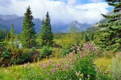 在前景的高山背景的花和加拿大人罗基斯 在班夫和碧玉之间的Icefields大路 免版税库存图片