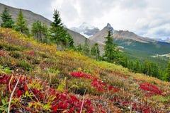 在前景的高山背景的花和加拿大人罗基斯 在班夫和碧玉之间的Icefields大路 库存图片
