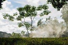 在前景的绿草和有雾的背景,公园在泰国 图库摄影