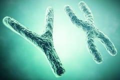 在前景,一个科学概念的YX染色体 3d例证 免版税图库摄影