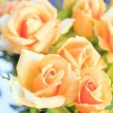 在前景,方形格式的橙色玫瑰 库存图片