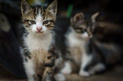 在前面的一只小猫blured的人一个 库存图片