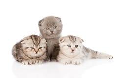 在前面的三只小小猫 背景查出的白色 库存图片