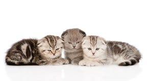 在前面的三只小小猫 背景查出的白色 免版税库存图片