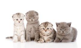 在前面的四只小小猫 背景查出的白色 免版税库存照片