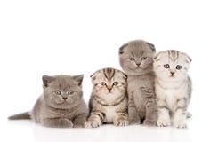 在前面的四只小小猫 背景查出的白色 库存图片