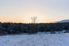 在前面的日落冬天偏僻的树 图库摄影