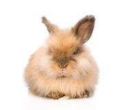 在前面的逗人喜爱的兔子 背景查出的白色 库存照片
