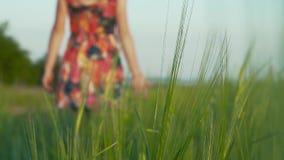 在前面背景黑麦钉 在背景美丽的有长的leggs的女孩在与花的短裙在黑麦走 股票视频