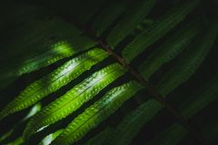 在剑蕨Nephrolepis exaltatain的阳光庭院 免版税库存图片