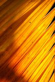 在剧烈的光和阴影的黄色棕榈叶与自然阳光3 免版税库存照片