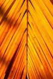 在剧烈的光和阴影的黄色棕榈叶与自然阳光2 免版税库存照片
