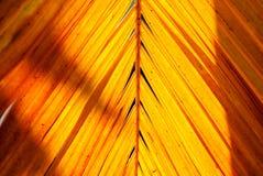 在剧烈的光和阴影的黄色棕榈叶与自然阳光1 图库摄影