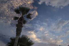 在剧烈的日落天空的月亮与云彩 反对微量的棕榈树 库存图片