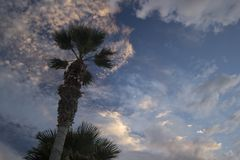 在剧烈的日落天空的月亮与云彩 反对微量的棕榈树 免版税库存照片