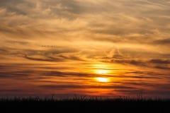 在剧烈的日落背景的飞鸟 库存图片