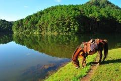 在剧痛ung湖的一匹马 免版税库存照片