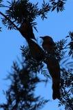 在剪影的四只小的鸟在Canyon, Outhback澳大利亚人国王 免版税库存图片