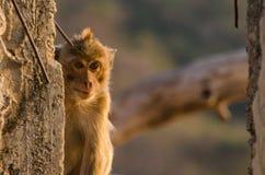 在剪影的猴子 库存图片
