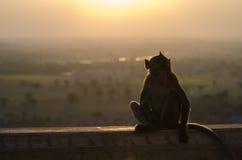 在剪影的猴子 免版税图库摄影