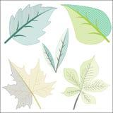 在剪贴美术的不同的叶子 免版税库存图片