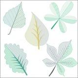 在剪贴美术的不同的叶子 库存图片