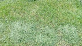 在割草坪以后的草 影视素材