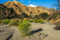 在加利福尼亚峡谷的干燥河床 库存图片