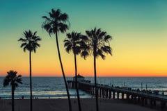 在加利福尼亚海滩的棕榈树 被处理的葡萄酒 免版税库存照片