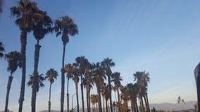 在加利福尼亚海滩的Palmtrees 免版税图库摄影