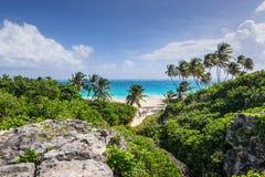 在加勒比岛底部海湾海滩的热带海滩, Barbad 免版税库存照片