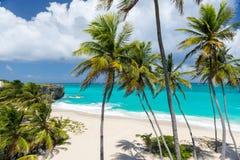 在加勒比岛(底下海湾,巴巴多斯)上的热带海滩 库存图片