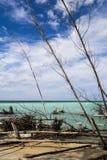 在加勒比岸的干燥木头 库存照片