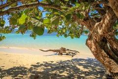 在加勒比海滩的漂流木头 使细致的沙子绿松石水白色靠岸 阳光 放松 多米尼加共和国 库存照片