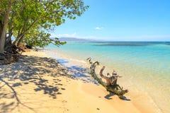 在加勒比海滩的漂流木头 使细致的沙子绿松石水白色靠岸 阳光 放松 多米尼加共和国 免版税库存图片