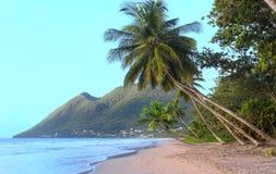 在加勒比海滩,马提尼克岛海岛的棕榈树 库存照片