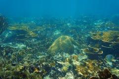 在加勒比海珊瑚礁的水下的风景  库存图片