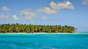 在加勒比海滩,海岛Saona的棕榈海岸线 免版税图库摄影