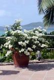 在加勒比背景的花的布置 免版税库存图片