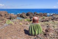 在加勒比风景的瓜仙人掌 免版税图库摄影