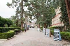 在加州大学洛杉矶分校校园里的熊步行 库存照片