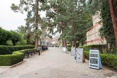 在加州大学洛杉矶分校校园里的熊步行 库存图片